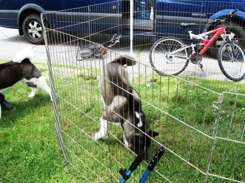 Picture of: Best Build Your Own Dog Fence