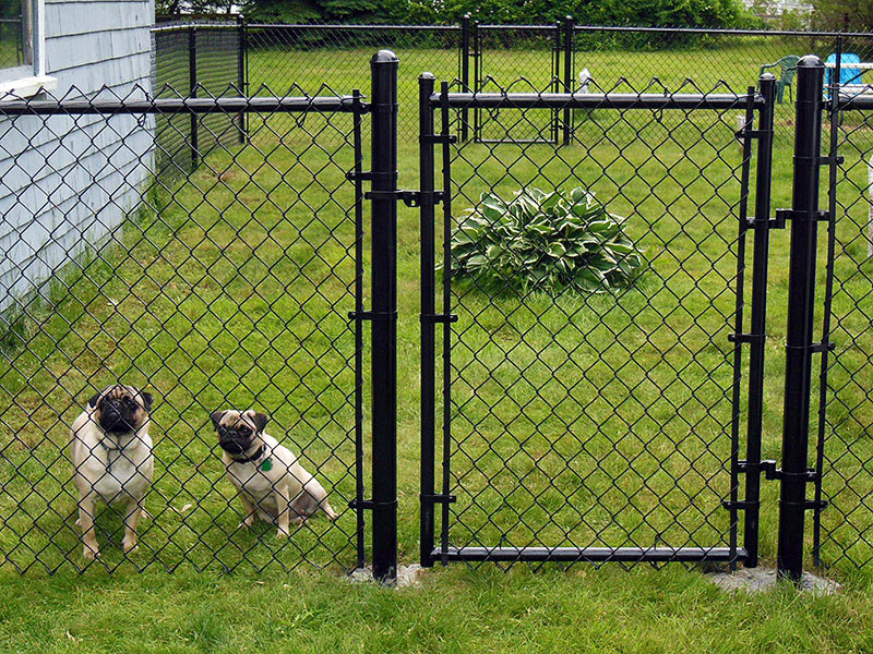 Picture of: Best Dog Fences