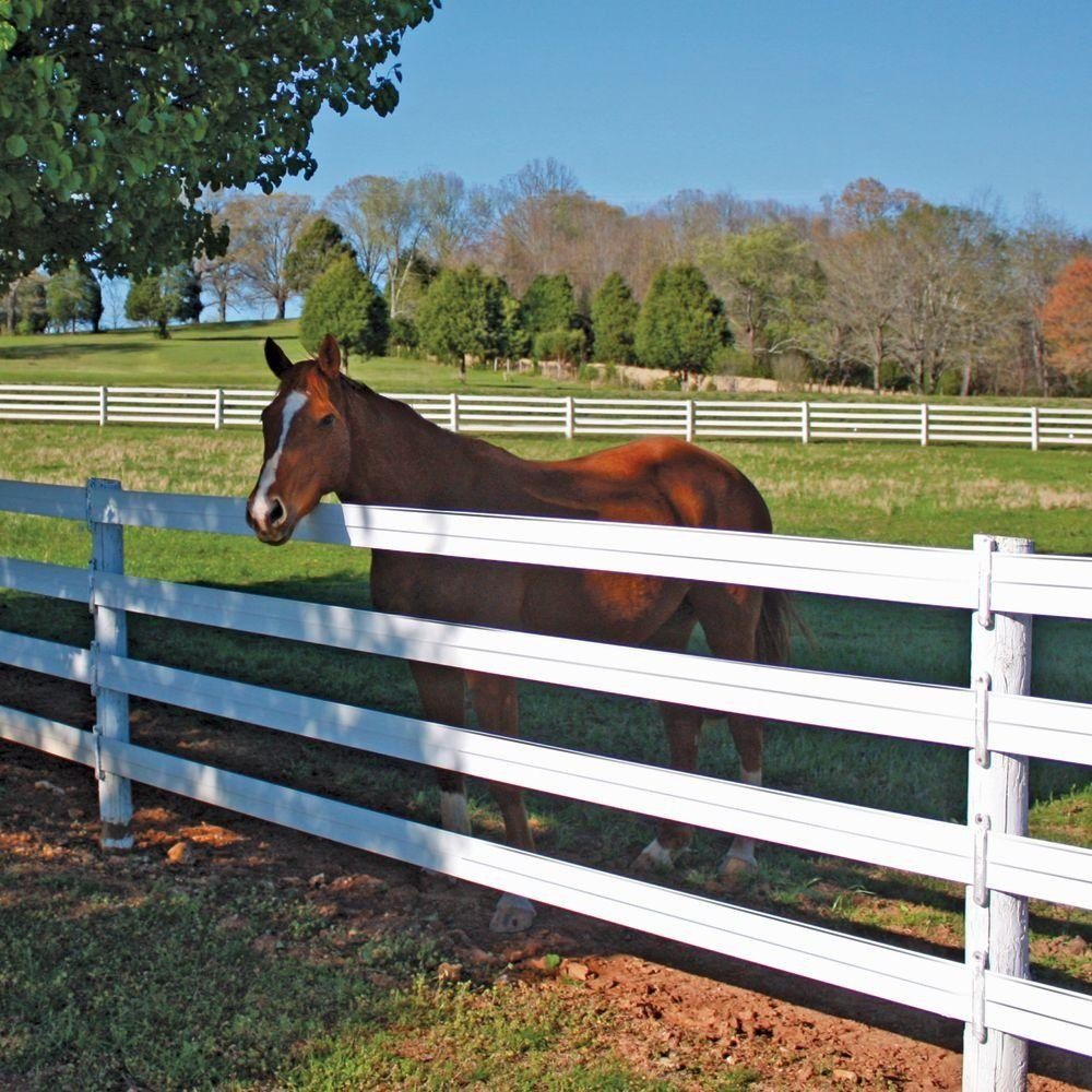 The Right Horse Fence Ideas