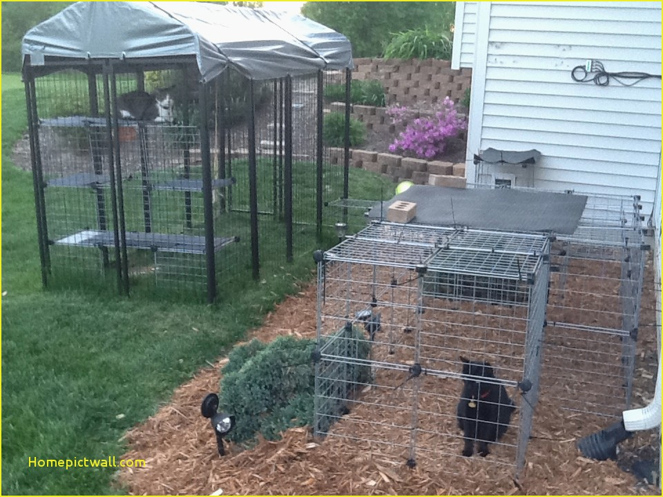 Picture of: Best Large Dog Fence