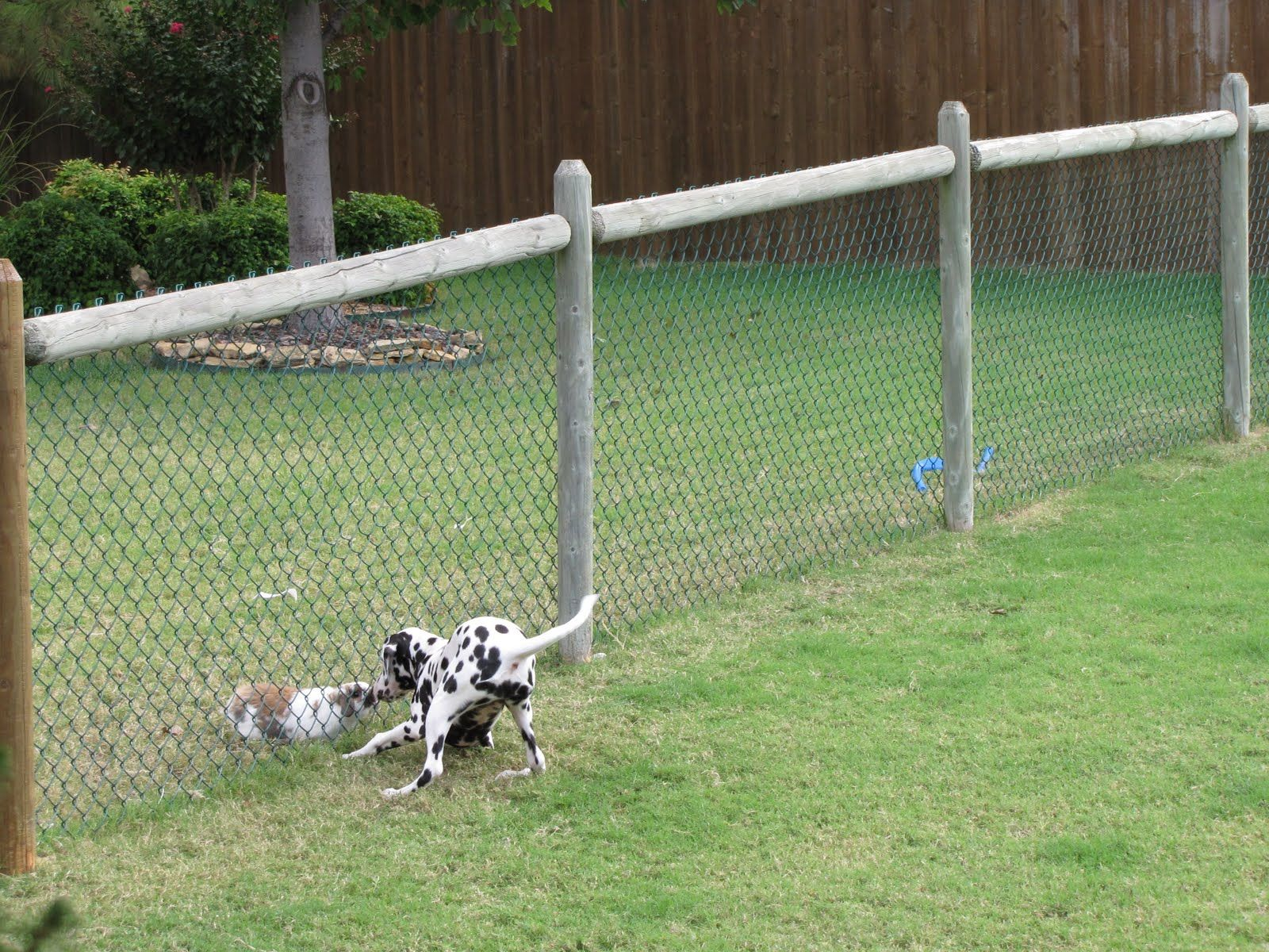 Picture of: Build Your Own Dog Fence Mesh