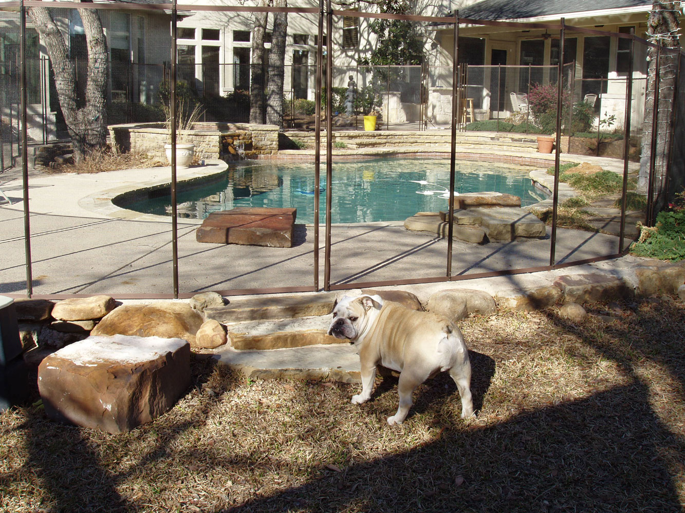 Build Your Own Dog Fence Electric System
