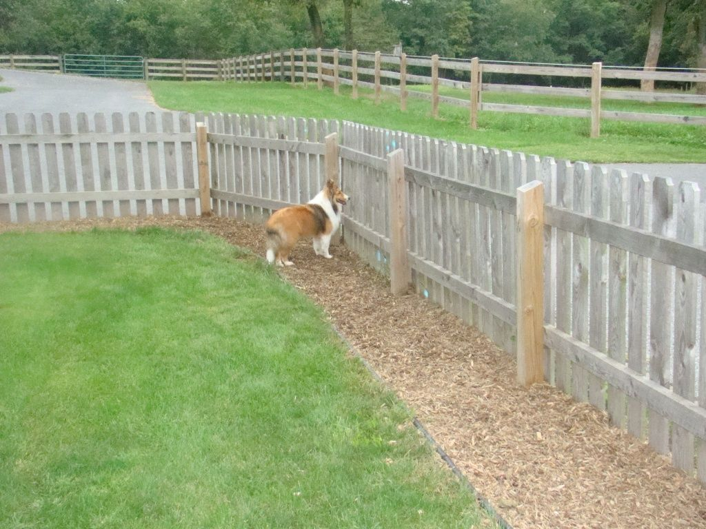 Picture of: Buy Small Dog Fence