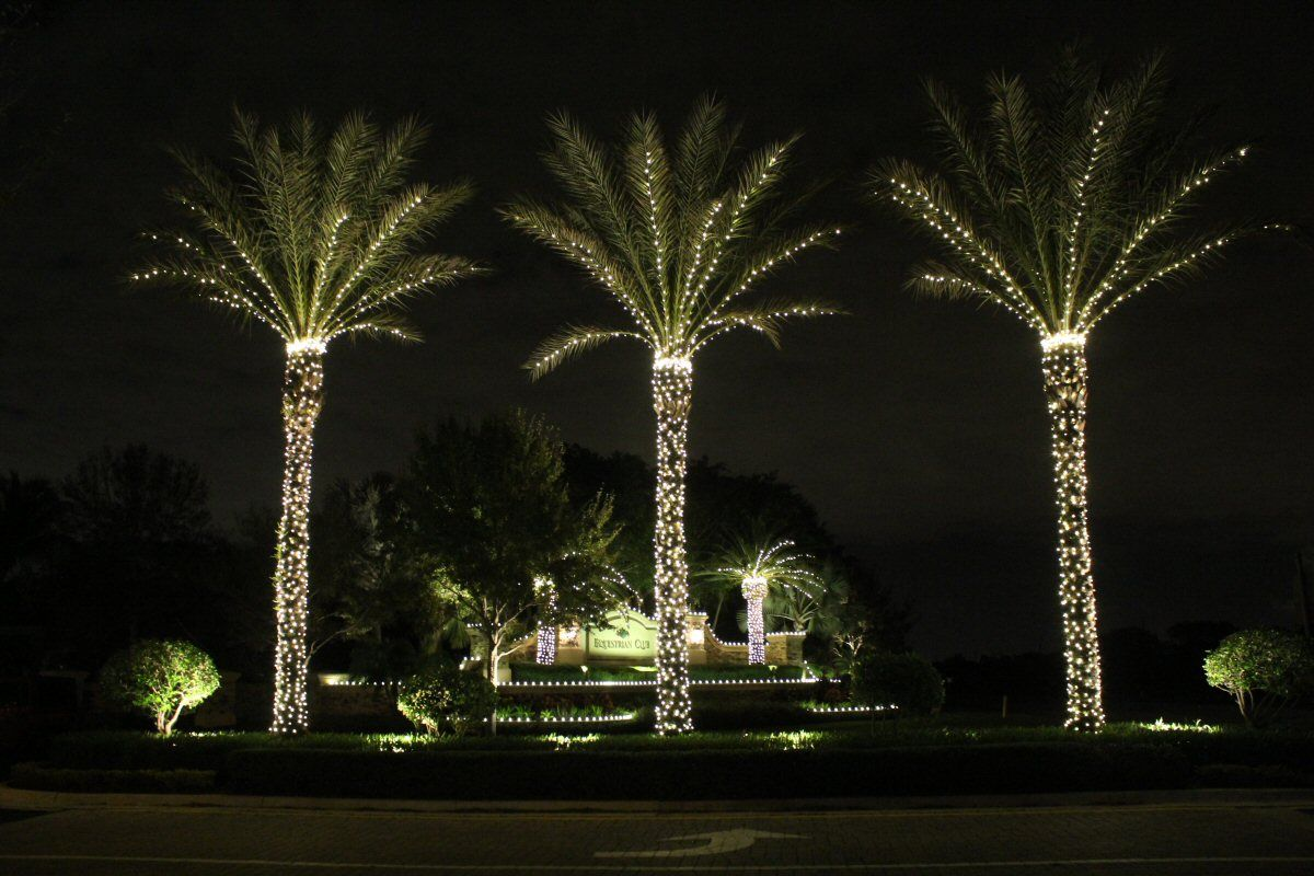 Picture of: Decorative Outdoor Lighted Palm Tree