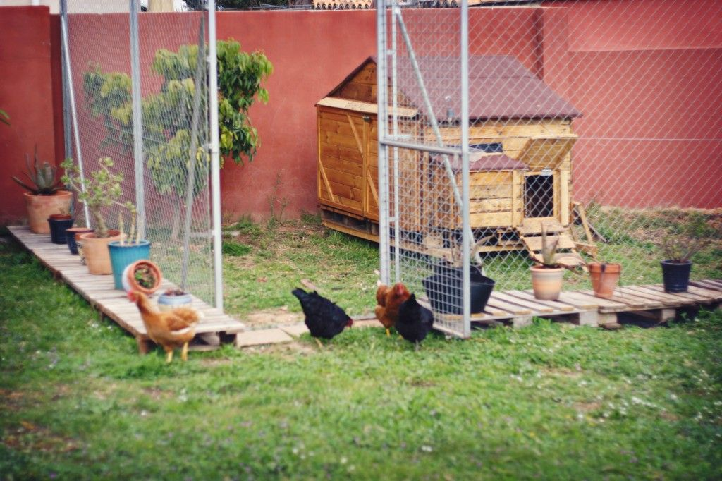 Picture of: Easy Chicken Fence Ideas