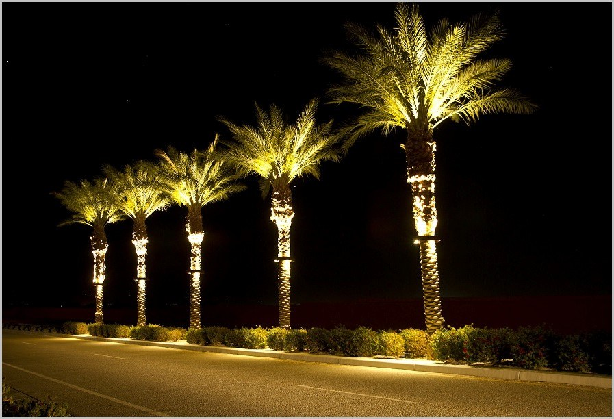 Picture of: Industrial Outdoor Lighted Palm Tree