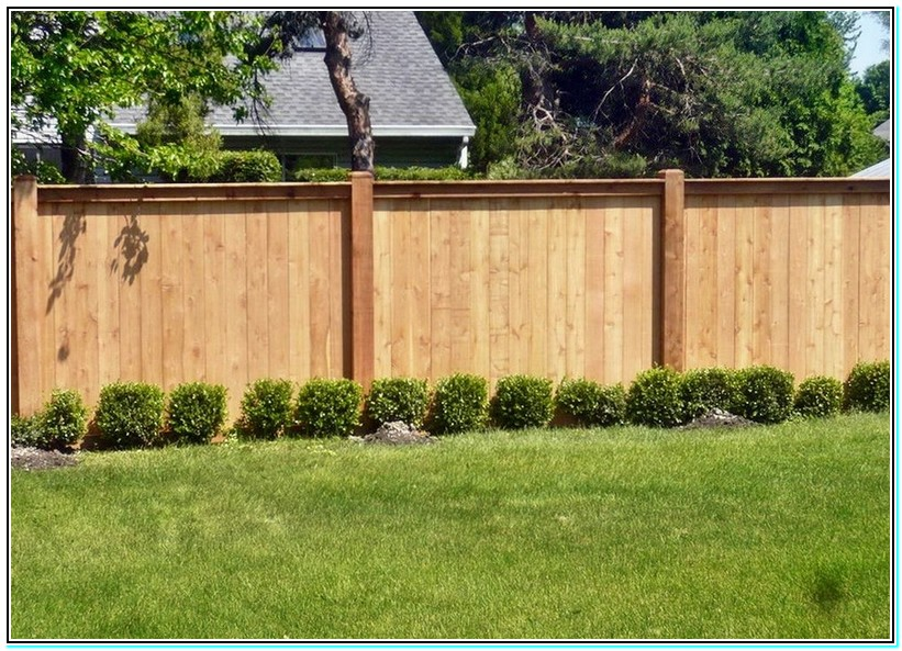 Picture of: Inexpensive Yard Fences Bamboo
