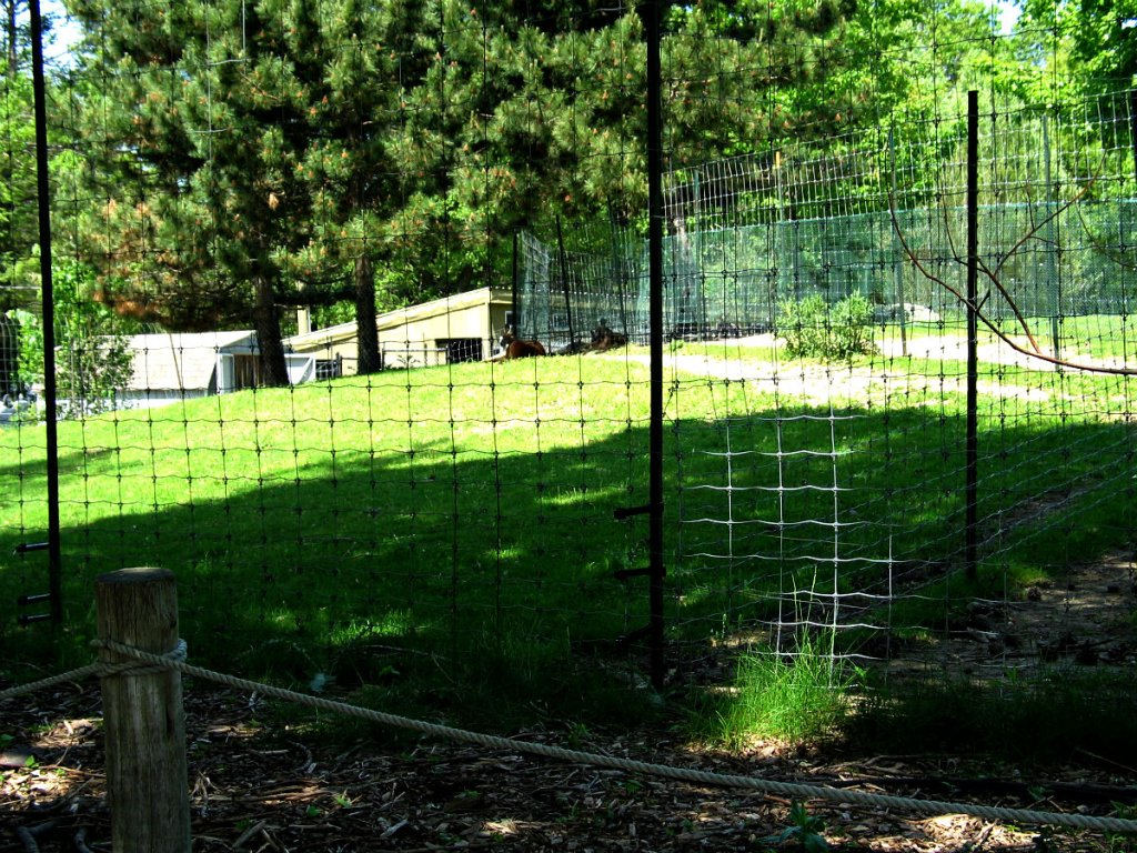 Image of: Install Metal Deer Fencing