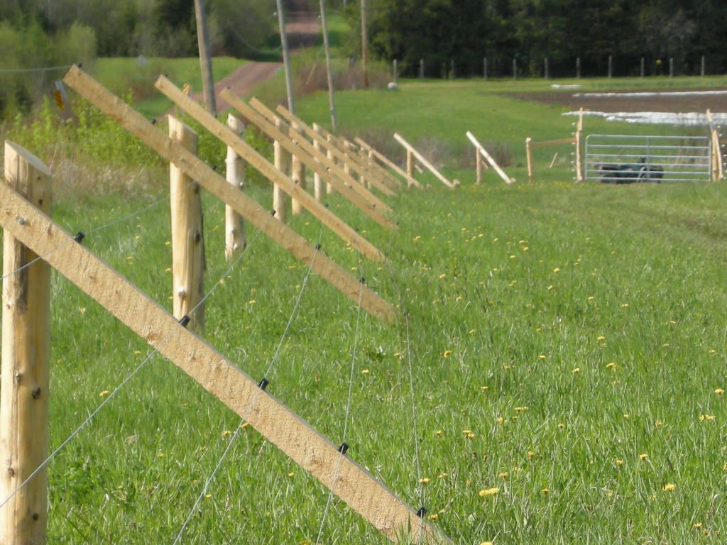 Image of: Keeping Metal Deer Fencing
