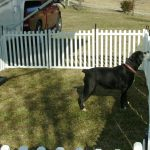 New Build Your Own Dog Fence