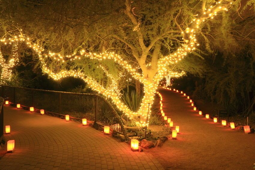 Picture of: Outdoor Fairy Lights Cape Town