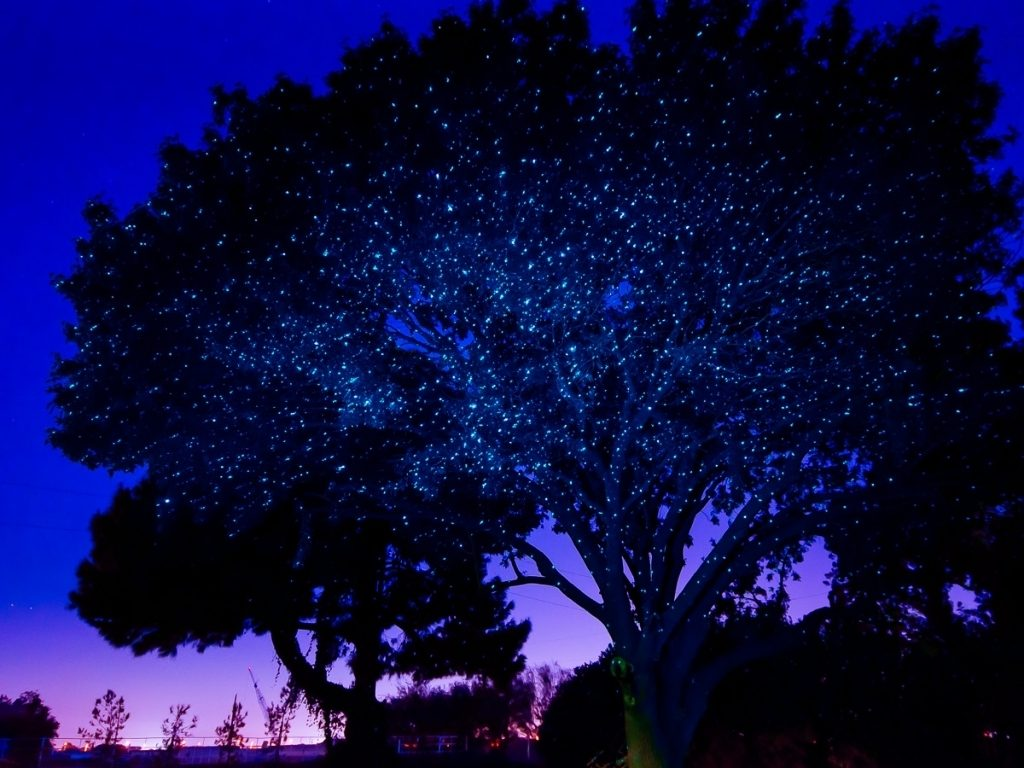 Picture of: Outdoor Laser Lights Terrific