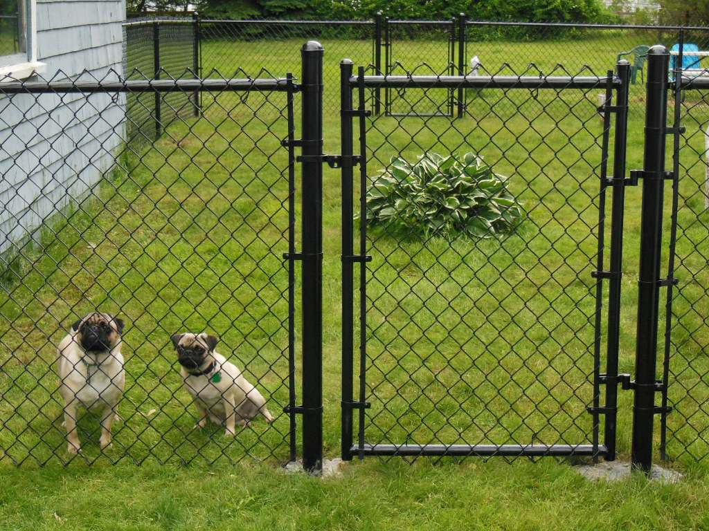 Picture of: Panels Dog Fences Outdoor