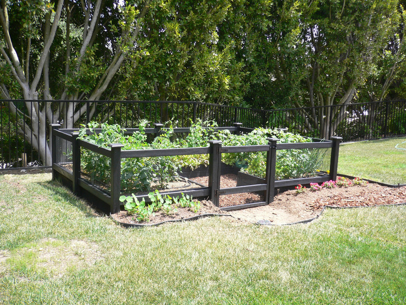 Picture of: Popular Garden Fence Ideas