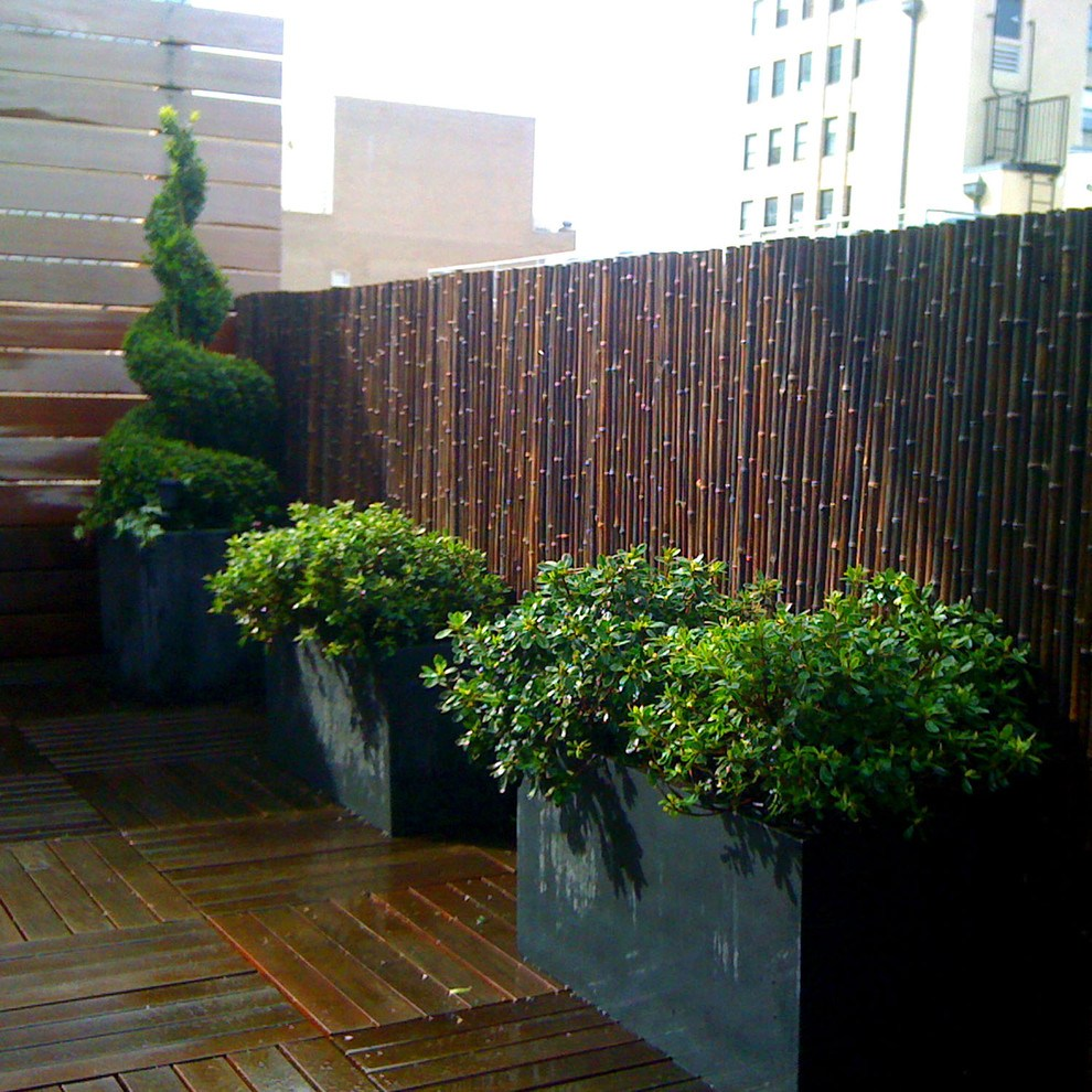 Picture of: Privacy Fence Ideas and Plants