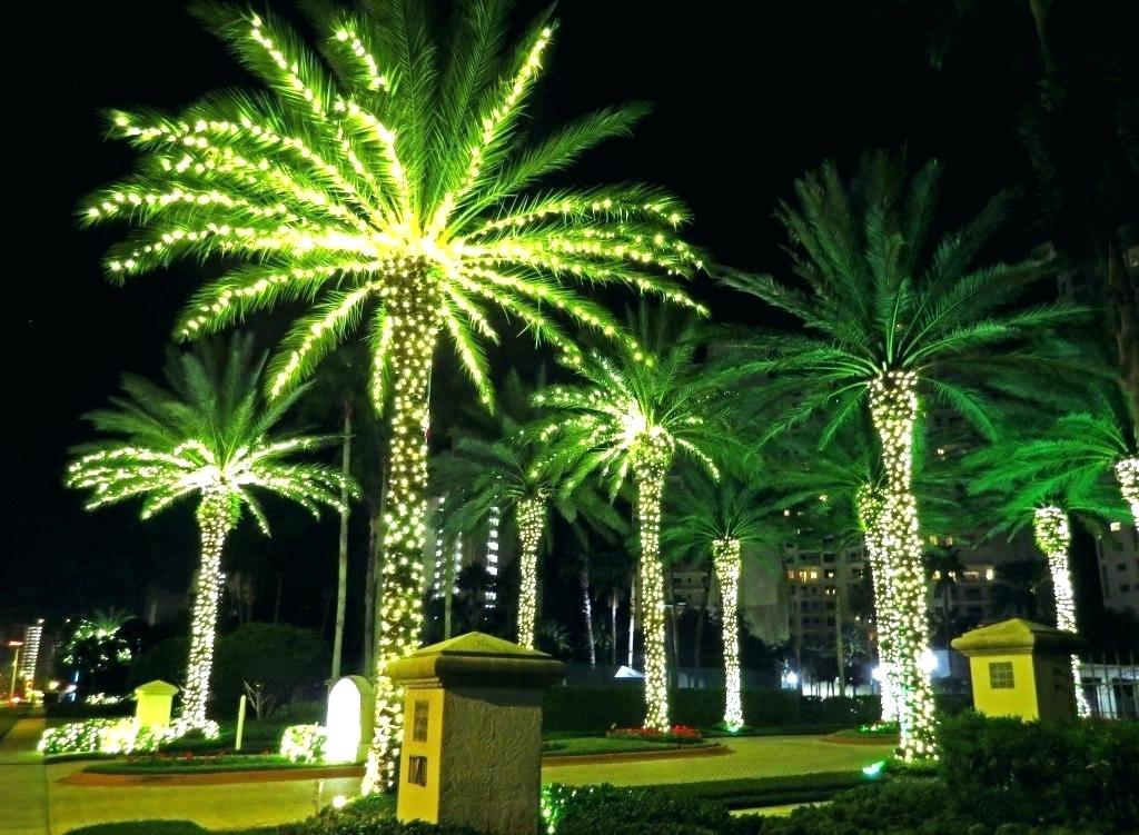 Picture of: Rope Outdoor Lighted Palm Tree
