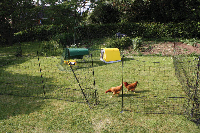 Picture of: Simple Chicken Fence Ideas Design