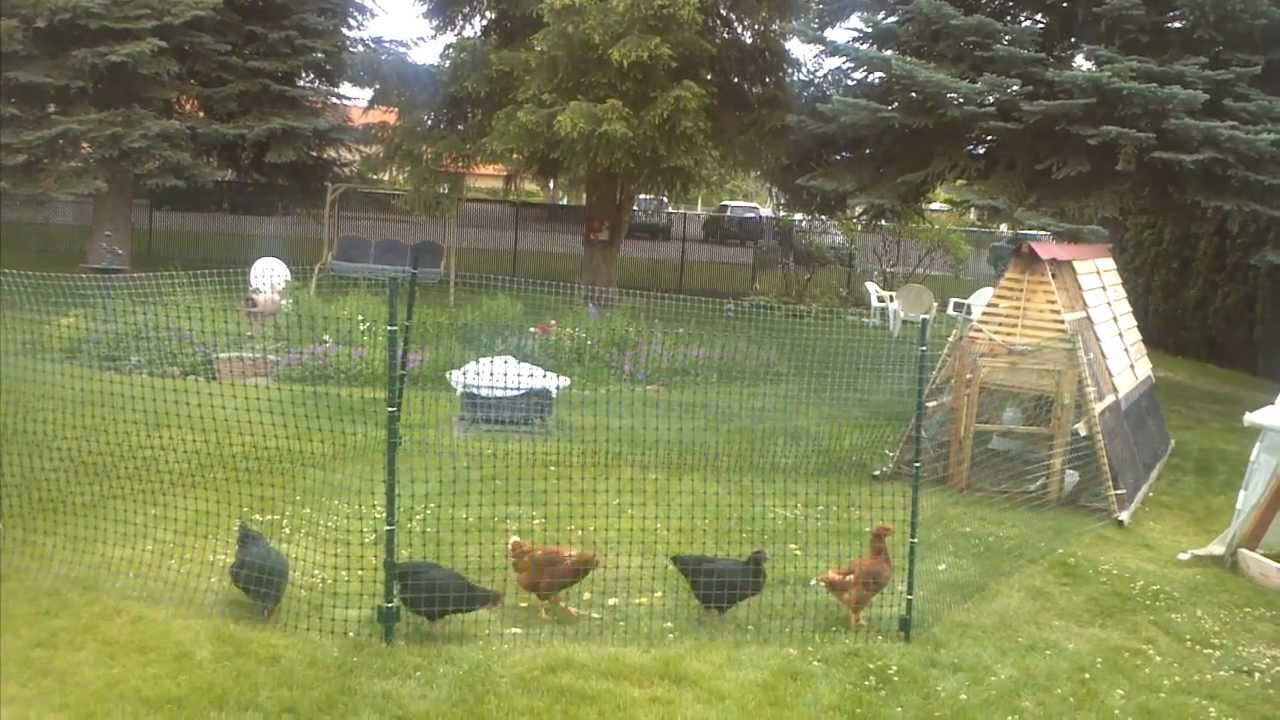 Picture of: Simple Chicken Fence Ideas