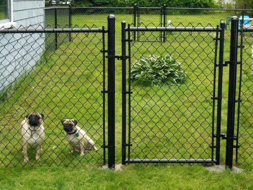Small Dog Fence Enclosure