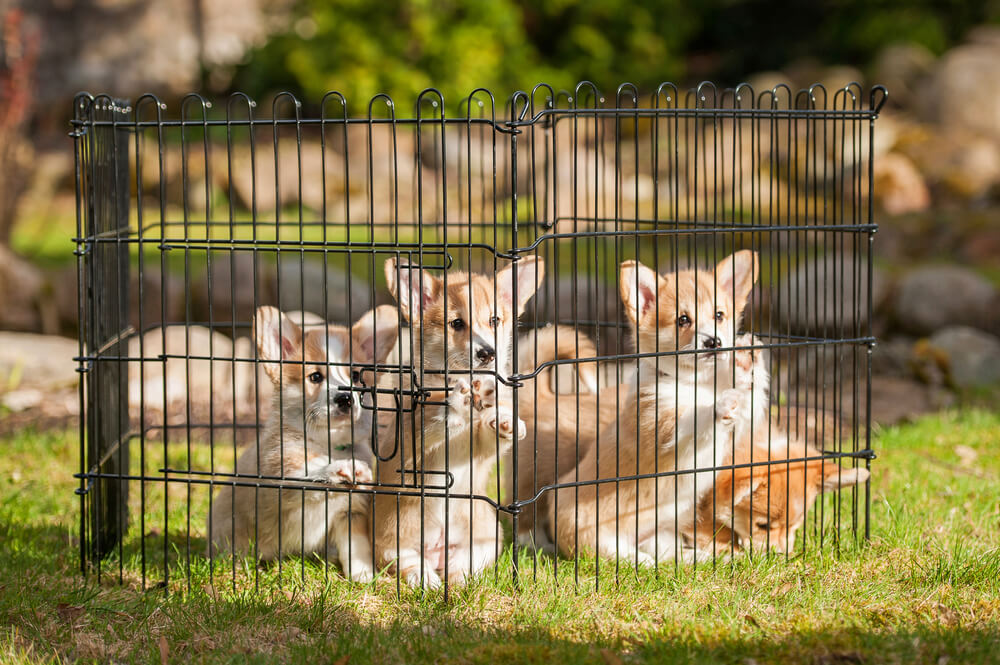 Picture of: Small Metal Dog Fence